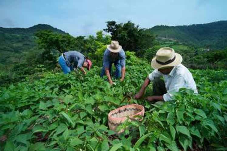 20190119221041-y-agricultura-familiar.jpg