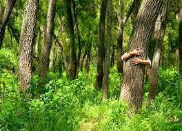 20190617163045-forestal-b-.jpeg